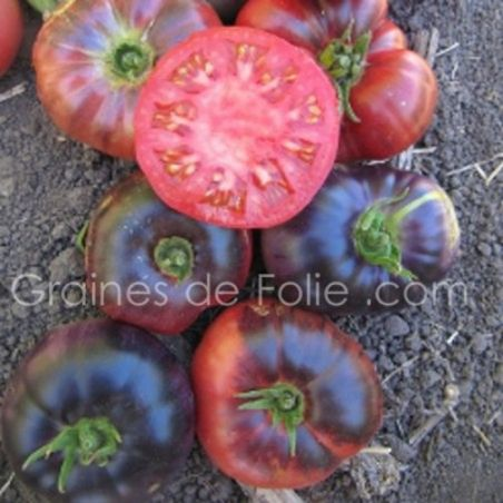 BIO Tomate INDIGO BLUE BEAUTY graines semences certifiée AB