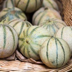 Melon CHARENTAIS graines semences certifiée Agriculture biologique