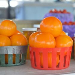Bio Tomate orange VALENCIA graines semences certifiée BIO
