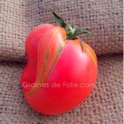 Tomate COEUR de BOEUF ROSE graines semences variétés anciennes certifiées AB