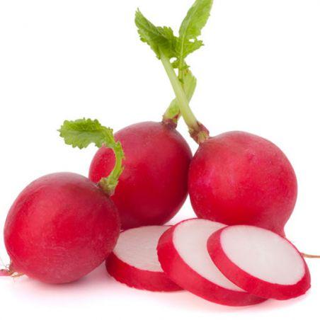 Radis Scarlet Globe graines semences BIO