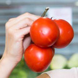 Bio Tomate Moneymaker graines semences certifiées