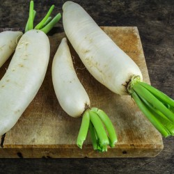 BIO radis blanc Daïkon japonais graines semences