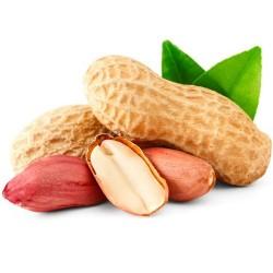 ARACHIDE CACAHUETE Arachis hypogaea cacahuète cacahouète graines semences seeds