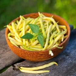 Haricot Nain CHEROKEE WAX beurres productif semences graines anciennes