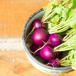 Radis violet MALAGA graines semences potagères