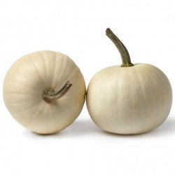 COURGE LUMINA graines semences potiron blanc