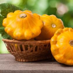 Bio Pâtisson orange graines semences potager certifiée AB Agriculture biologique