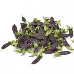 Pois Shiraz Mangetout graines semences potagères