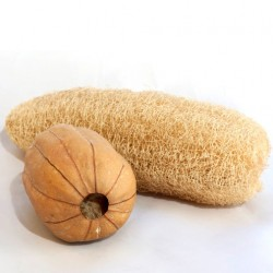 Courge Eponge Luffa Cylindrica graines semences anciennes seeds