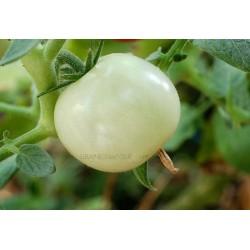 « WHITE CHERRY» Tomate cerise