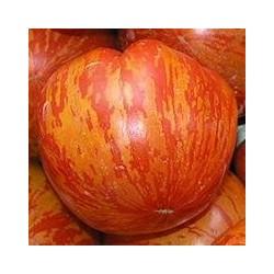 «TIGERELLA» Tomate tigrée