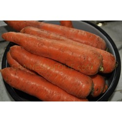 « ROUGE deST VALERY» carotte