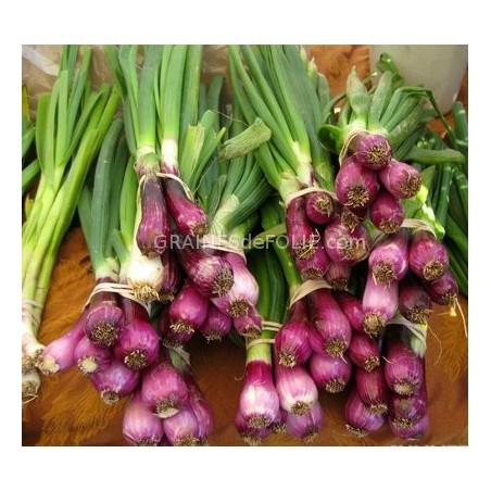 «LILIA» Oignon Italien violet